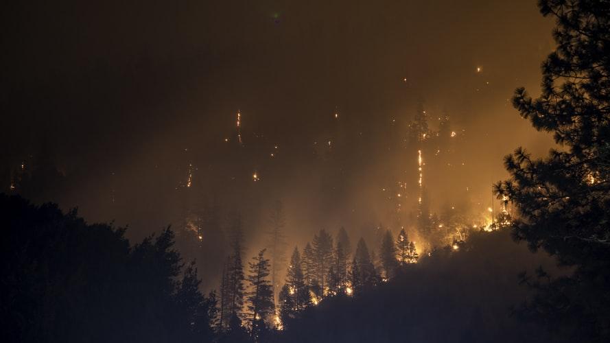 За прошедшую неделю в крае были потушены более ста лесных пожаров